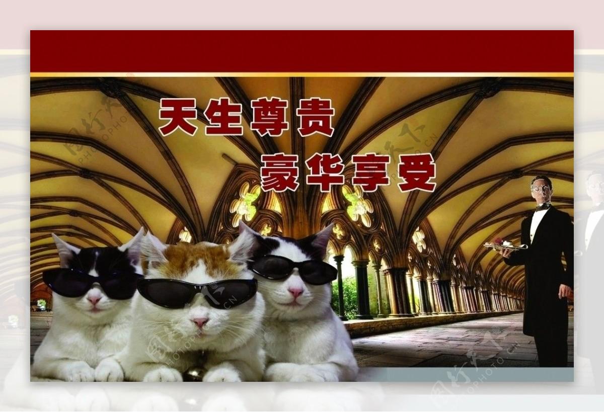 酷猫咪图片